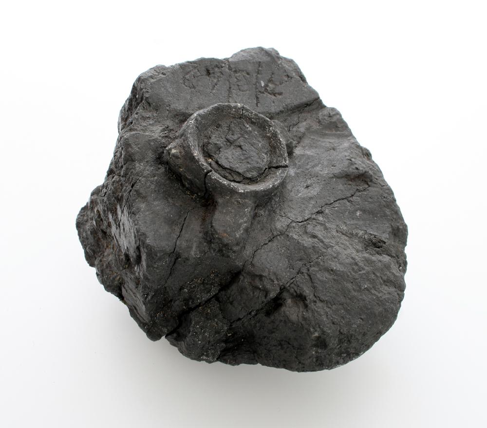 Objects Found In Rocks Carboniferous fo...